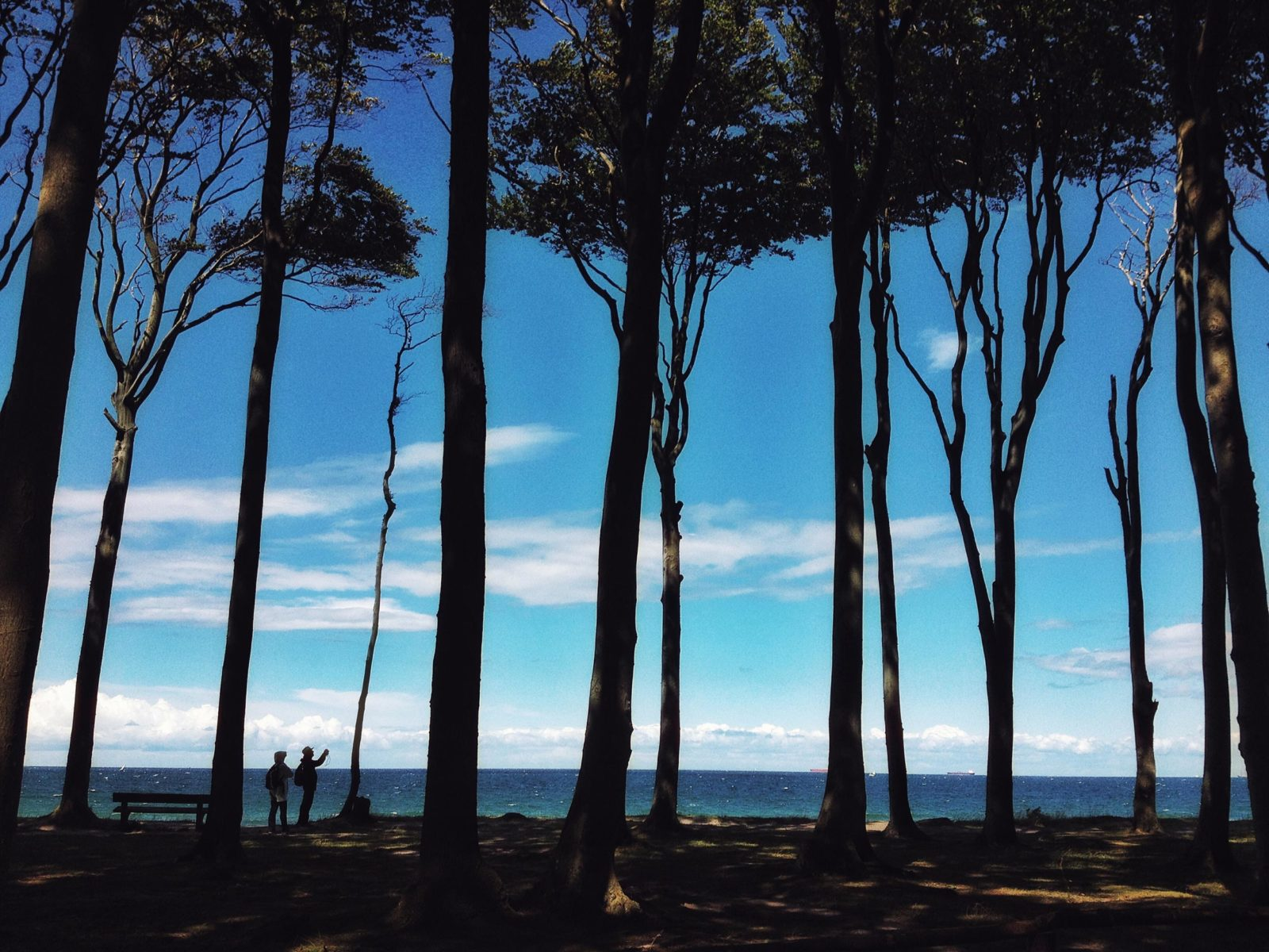 gespensterwald1