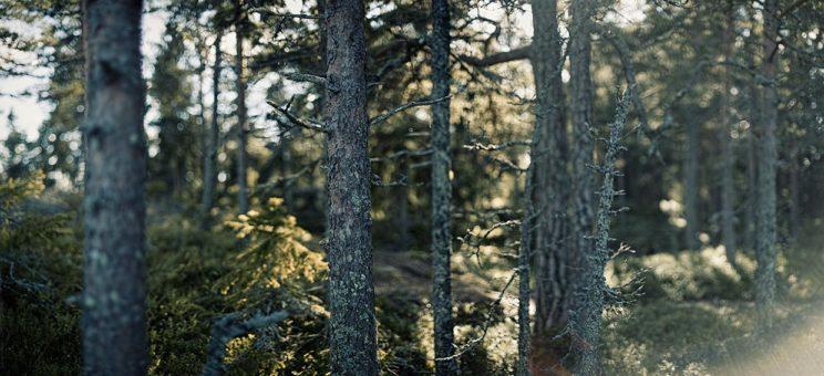 ostsee_sundsvall_baum2d