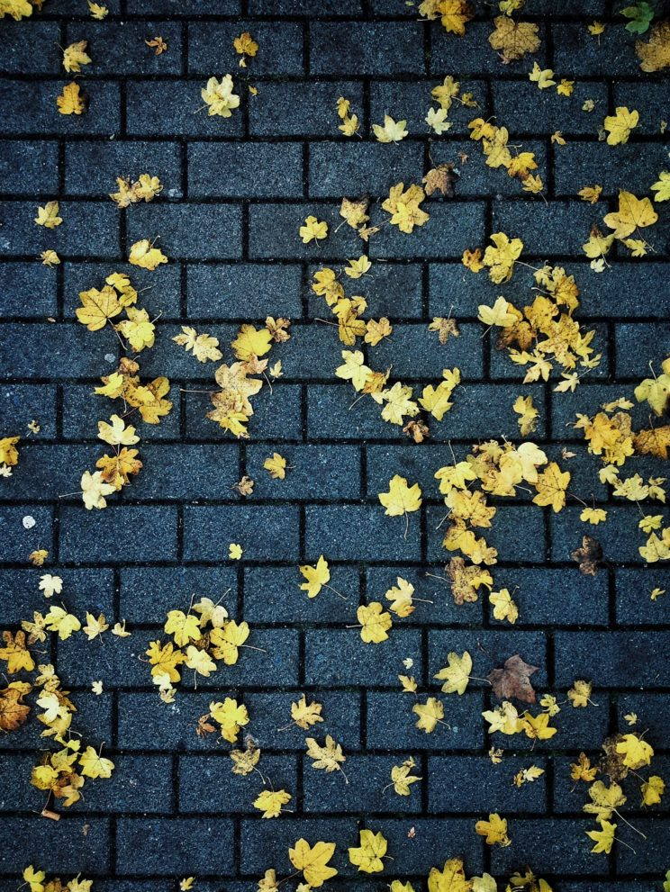 Fall leafs floor city autumn