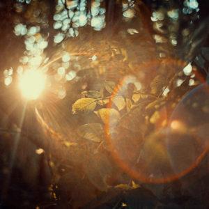"FineArt prints ""Nature"""